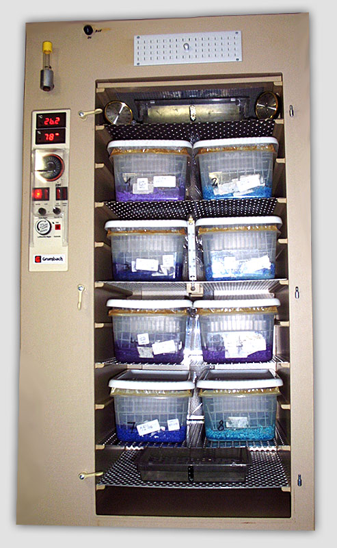 GRUMBACH incubator (mod. BS 300) containing clutches of eggs