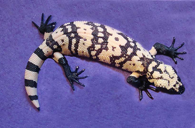 Patterns of Gila Monsters: unique and fascinating
