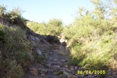 Arroyo in the AZ uplands